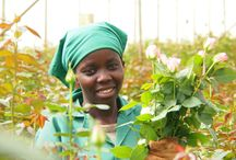 Le nostre rose solidali - Fairtrade