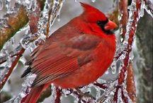 Birds I love / by Kathy McFarlin