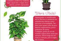 Plantas quarto