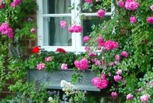 Window boxes and front door