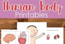 The human body (teaching resources)