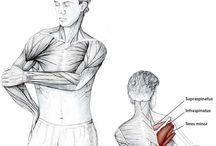 anatomik egzersiz
