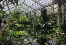 Greenhouse / greenhouse
