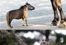 Animals / by Cori Mitchell