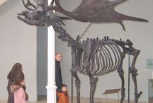 Animals. Bones