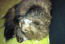 Molly / Fikk en katt som heter Molly.