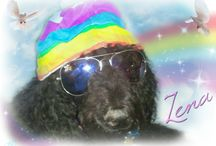FREE PHOTO MEMORIALS done for others / Photo Memorials done by Debbie's Painted Pets