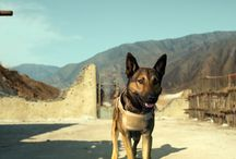 "Max / ""Max"" is a coming-of-age story about a young teen from a family dealing with loss, who finds friendship, comfort and adventure with the heroic military dog of his fallen brother."