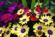 Flowers / Beautiful flowers, blooms of all shapes and sizes