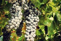 The finest wines and the tasty drinks / The beverages that make italy famous in the world