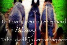 German Shepherd / by Melody Poggio