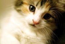 Koty - domowe