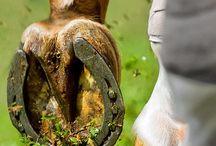 Beautiful horse rack pics