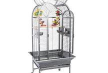 Birds supplies