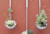 Virágok -kaktusz