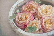 love of roses / by Vildan Yildiz