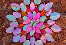 høst mandala
