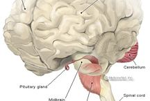 Pituytar and fibromyalgia problems