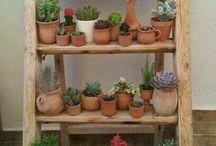 Succulent pots & shelving