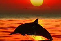 Amazing Oceans