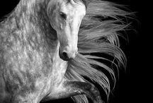 Horsie horsie