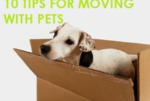 ✳Moving with Pets