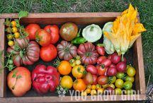 Harvest / by S.W.Q.V. Garden