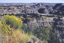 Theodore Roosevelt National Park (North Dakota) / by Kimberly Levi-Stordeur