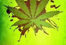 HEMP Cannabis Freedom / by YourNightWriter