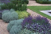 *aromatic herbes