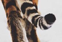 • Animal • / Gli animali si capiscono senza parlare, gli uomini si parlano senza capirsi.