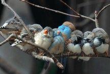 Birdies / by Danielle Manning