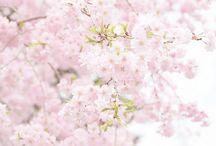 Nihon kawaii to kirei  desu ~❀ / ❀  キレイ に 日本 カワイイ デス ~ ❀