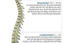 Rückeninfo