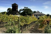 Mendocino County Beer and Wine / Our county is rich with flavorful brews and  wines. You are sure to fall in love with one of them. Enjoy!