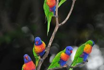 Colorful birds and art