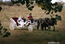Colorado Wedding Venues / Hope you enjoy viewing some of the photos taken of our family's wedding ranch, located in Loveland, Colorado #coloradoweddingranch #loveland #colorado