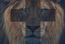African wild world