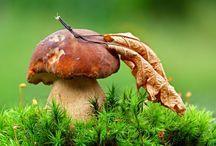 Грибы (mushrooms)