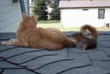 funny cat gif