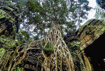 Cambodia Adventure / My Cambodian Adventures