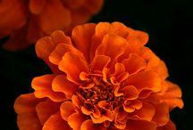 Fleur / Flowers