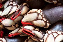 Percebes (Barnacles) / Marisco (Seafood)