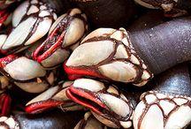 Percebes (Barnacles) / Marisco (Seafood)