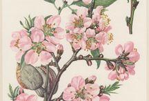 floral - lustration