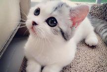 Chats cutes