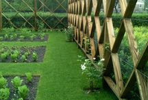 Ogród warzywny / Vegetable garden