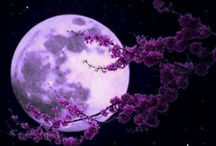 Moon Shine / by Denise Sipple