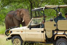 tips on safari lodges