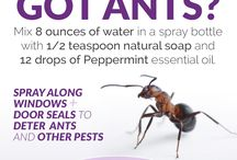 Natural Pest Removal